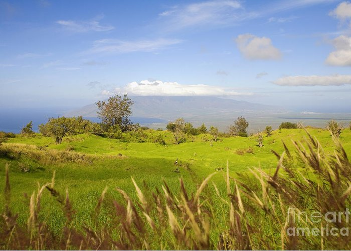 Afternoon Greeting Card featuring the photograph Ulupalakua Landscape by Ron Dahlquist - Printscapes