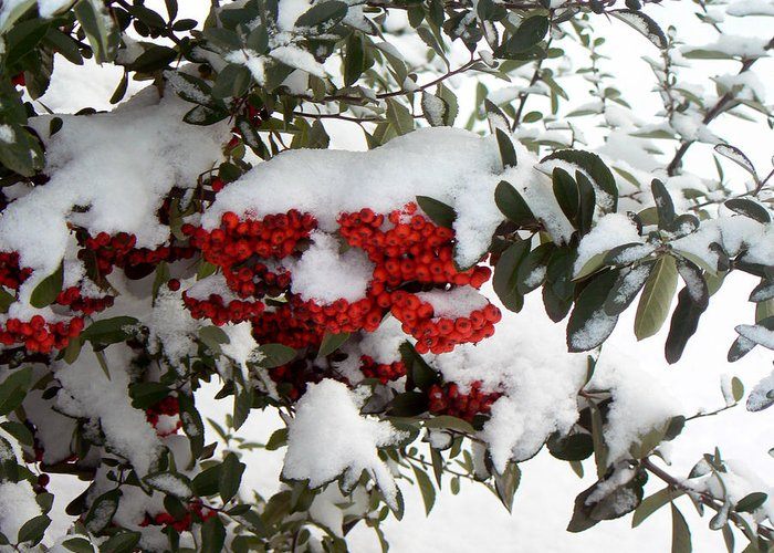 Snow Greeting Card featuring the photograph Under The Snow by Anastasia Michaels