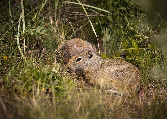 Unita Ground Squirrel Greeting Card featuring the photograph Unita Ground Squirrel by Chad Davis