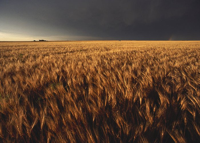 Nobody Greeting Card featuring the photograph United States, Kansas, Summer Thunder by Keenpress