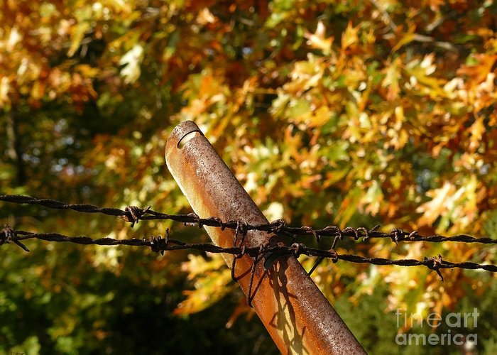 Barbed Wire Greeting Card featuring the photograph Untitled 31 by Jeff Breiman