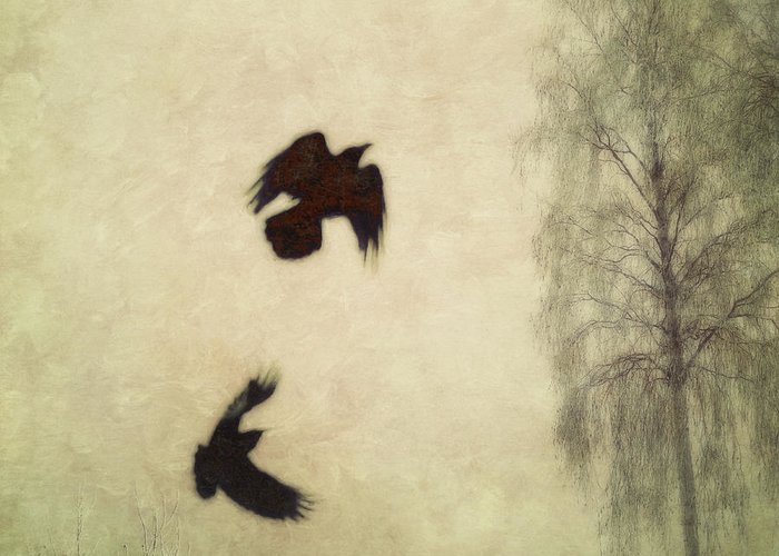 Raven Greeting Card featuring the photograph Untitled by Priska Wettstein