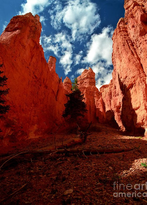 Bryce Canyon National Park Greeting Card featuring the photograph Utah - Bryce Canyon by Terry Elniski