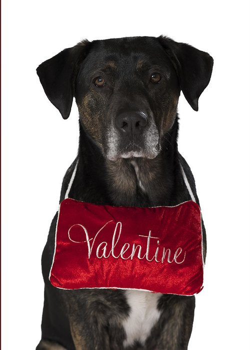 Dog Photograph Greeting Card featuring the photograph Valentine by Petra Mayer
