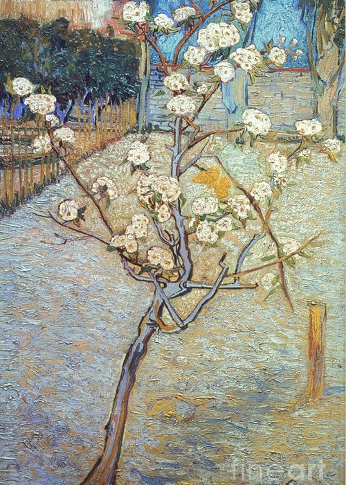 1888 Greeting Card featuring the photograph Van Gogh: Peartree, 1888 by Granger