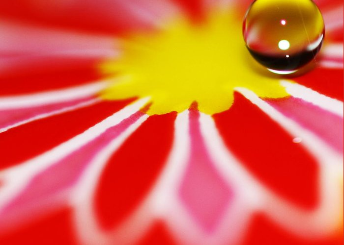 Water Drop Greeting Card featuring the photograph Variation On A Theme 13 by Rebecca Cozart
