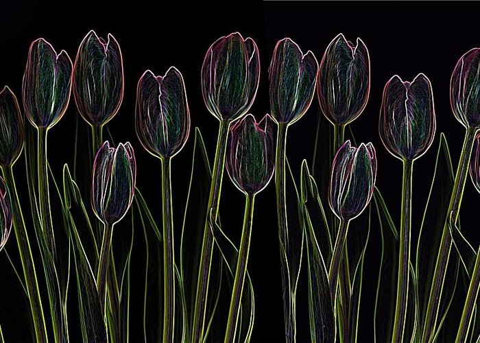 Scanography Greeting Card featuring the digital art Velvet Tulips by Deborah J Humphries