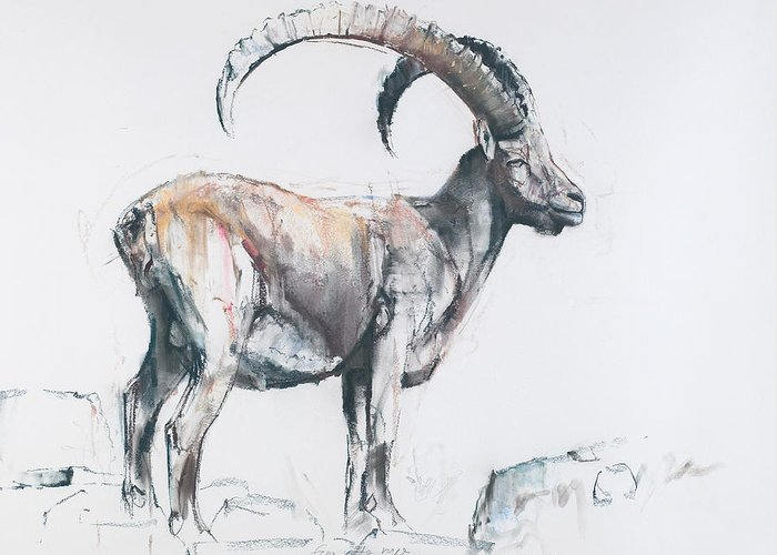 Goat Drawings Greeting Cards