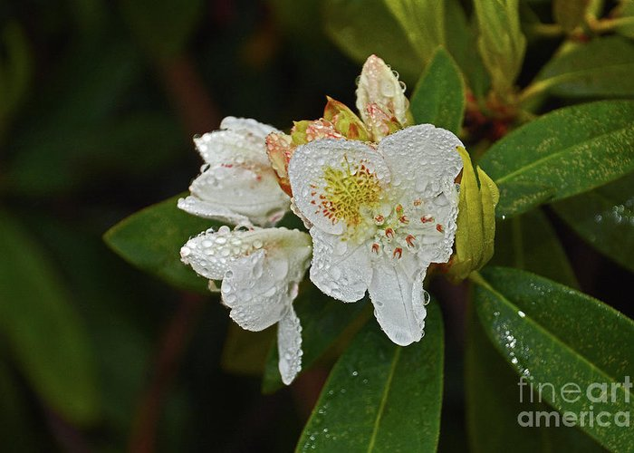 Raining Greeting Card featuring the photograph Very Wet Flower by Deborah Bowie
