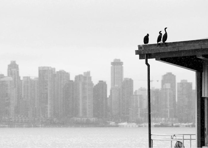 Black And White. Cormorant Greeting Card featuring the photograph View From Londsdale Quay by Barbara White