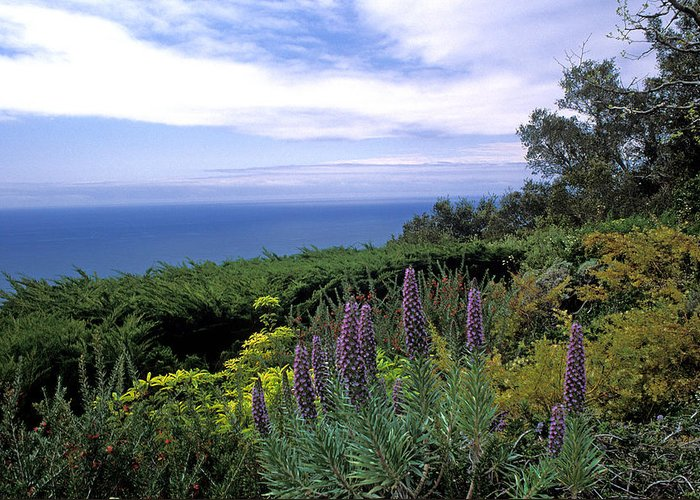 California Greeting Card featuring the photograph View From Ventana Big Sur by Kathy Yates