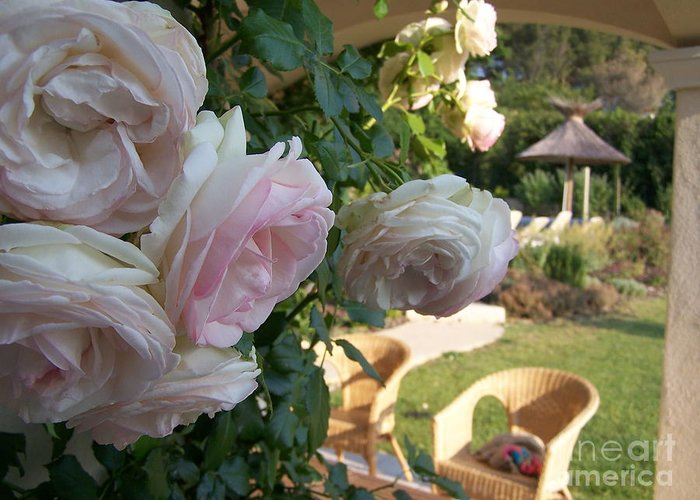 Roses Greeting Card featuring the photograph Villa Roses by Nadine Rippelmeyer