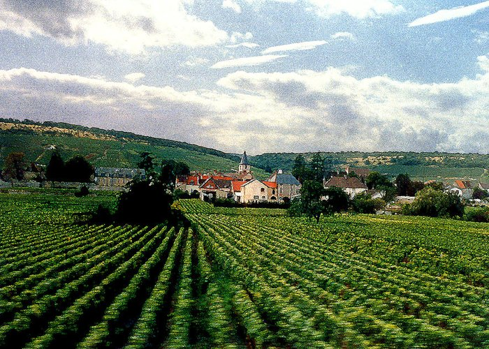 Vineyards Greeting Card featuring the photograph Village In The Vineyards Of France by Nancy Mueller