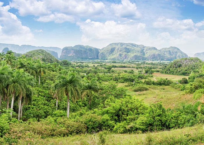 Cuba Greeting Card featuring the photograph Vinales Valley by Delphimages Photo Creations