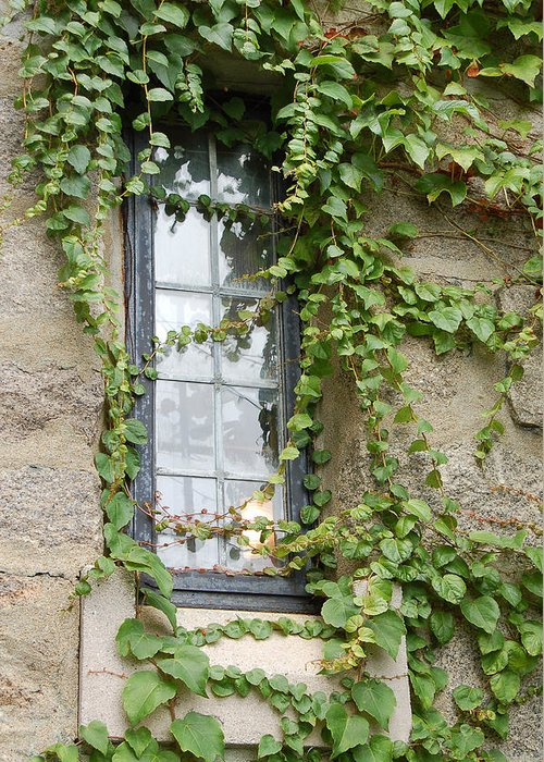 Window Greeting Card featuring the photograph Vine-covered Mysteries I by Suzanne Gaff