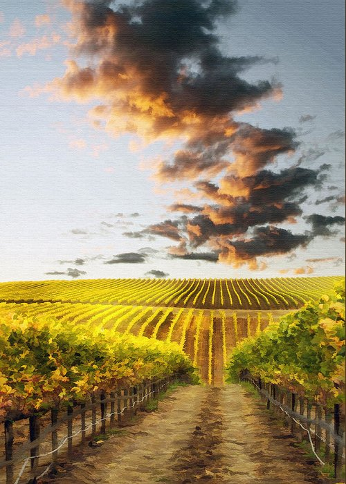 Vineyard Greeting Card featuring the photograph Vineard Aglow by Sharon Foster