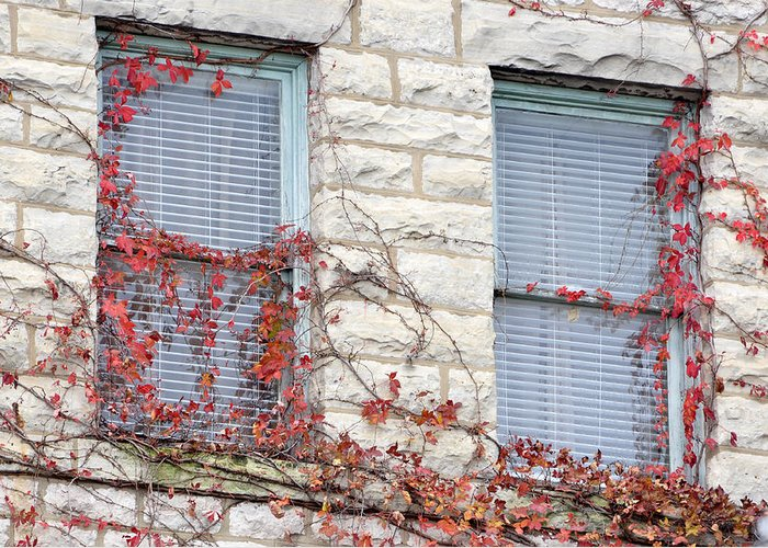 Architectural Greeting Card featuring the photograph Vines In Fall by Jan Amiss Photography