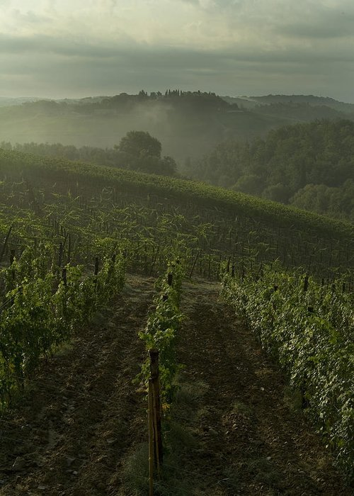 Vineyards Greeting Card featuring the photograph Vineyards Along The Chianti Hillside by Todd Gipstein