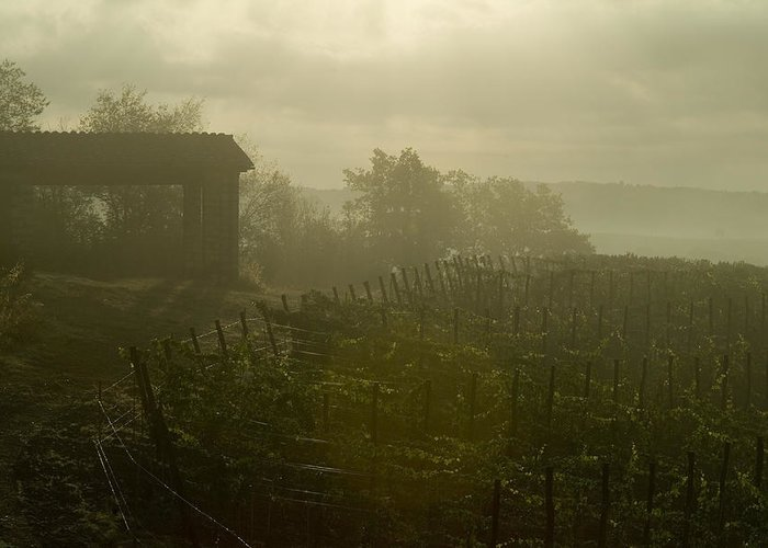 Vineyards Greeting Card featuring the photograph Vineyards Beside A Villa In The Fog by Todd Gipstein