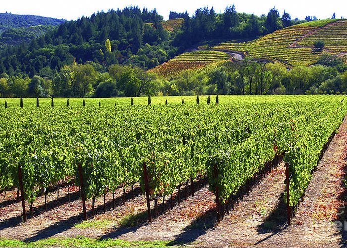 Vineyards Greeting Card featuring the photograph Vineyards In Sonoma County by Charlene Mitchell
