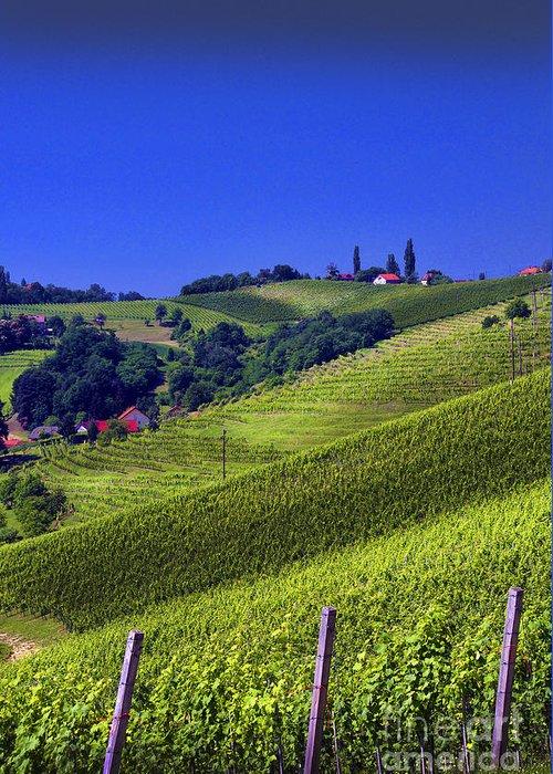 Wine Greeting Card featuring the photograph Vineyards Of Jerusalem Slovenia by Graham Hawcroft pixsellpix