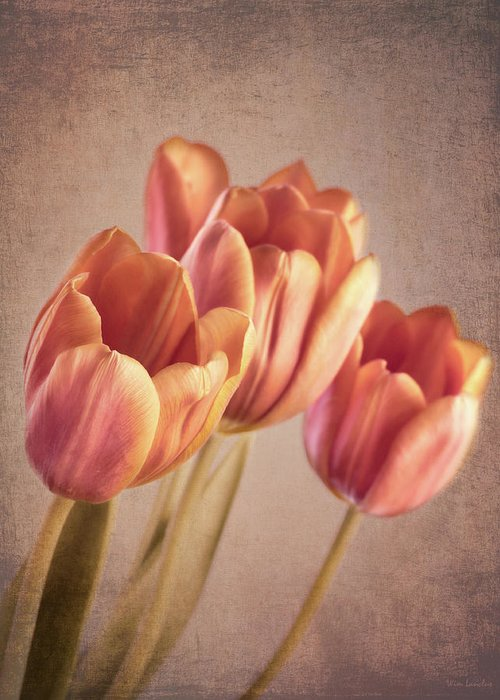 Tulips Greeting Card featuring the photograph Vintage Tulips by Wim Lanclus