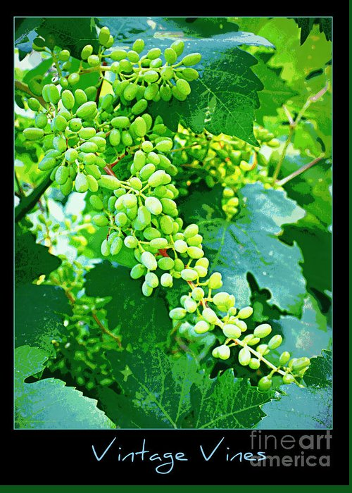 Vineyard Greeting Card featuring the photograph Vintage Vines by Carol Groenen