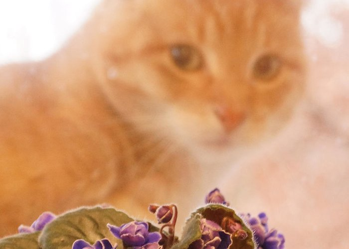 Orange Tabby Cat Greeting Card featuring the digital art Violets with Cat by Jana Russon
