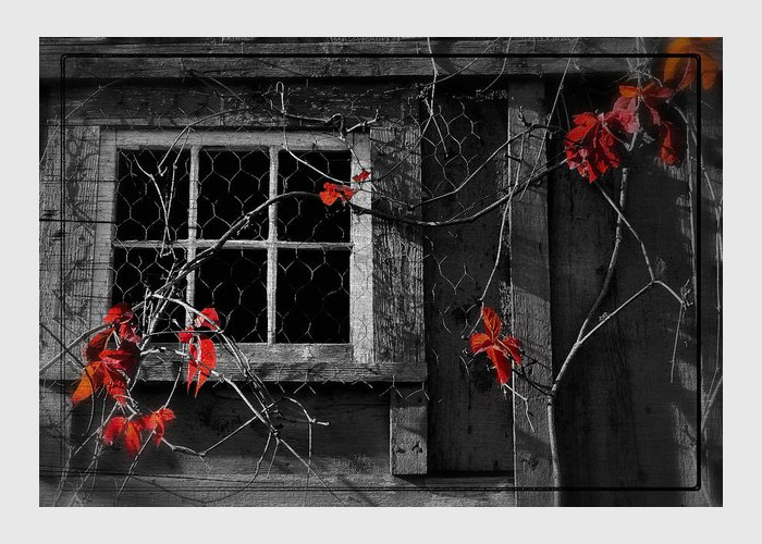 Window Greeting Card featuring the photograph Virginia Creeper by Thomas Schoeller