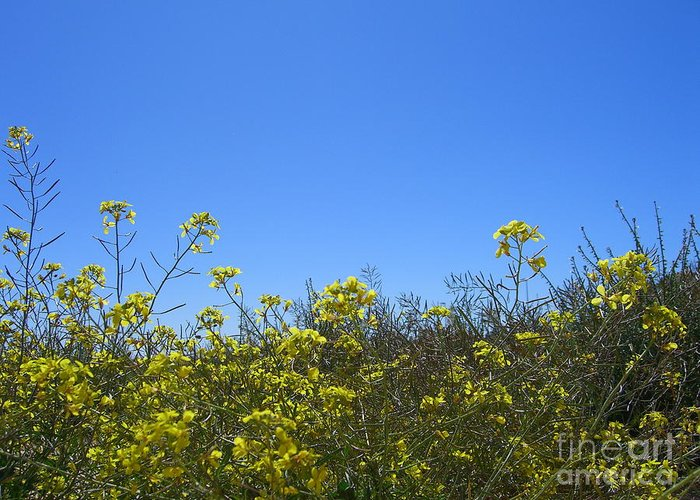 Flowers Greeting Card featuring the photograph Vista Flores by Jim Thomson