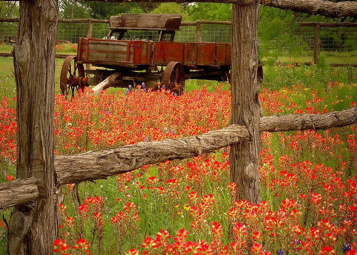 Spring Greeting Card featuring the photograph Wagon In Paintbrush - Texas Wildflowers Wagon Fence Landscape Flowers by Jon Holiday