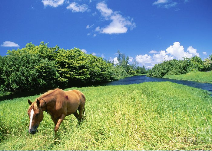 Animal Art Greeting Card featuring the photograph Wainiha Valley by Peter French - Printscapes