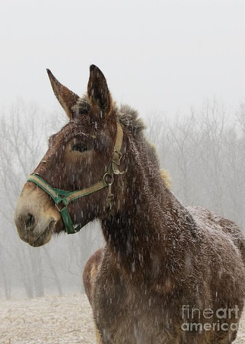 Mule Greeting Card featuring the photograph Waiting by Ann Davis