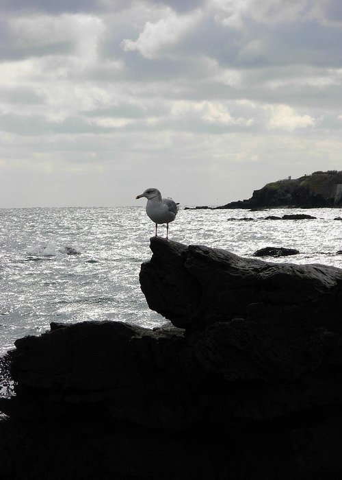 Birds Greeting Card featuring the photograph Waiting For Someone by Amanda Vouglas