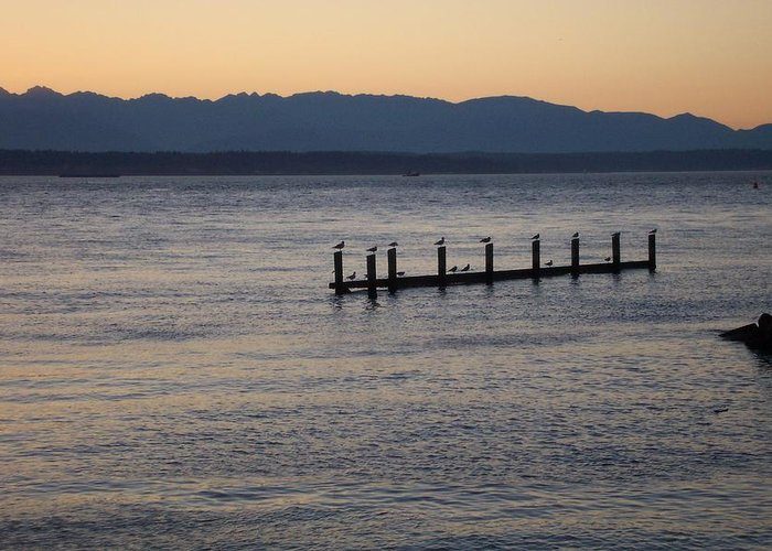 Puget Sound Greeting Card featuring the photograph Waiting by James Johnstone