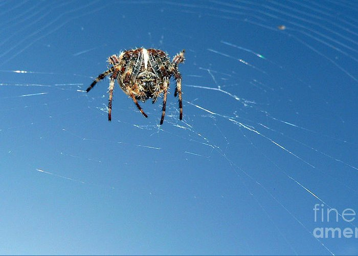 Spider Greeting Card featuring the photograph Waiting by Larry Keahey