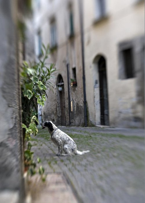 Dog Greeting Card featuring the photograph Waiting by Marilyn Hunt