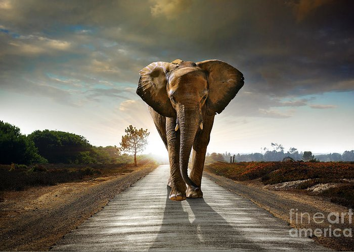 African Greeting Card featuring the photograph Walking Elephant by Carlos Caetano
