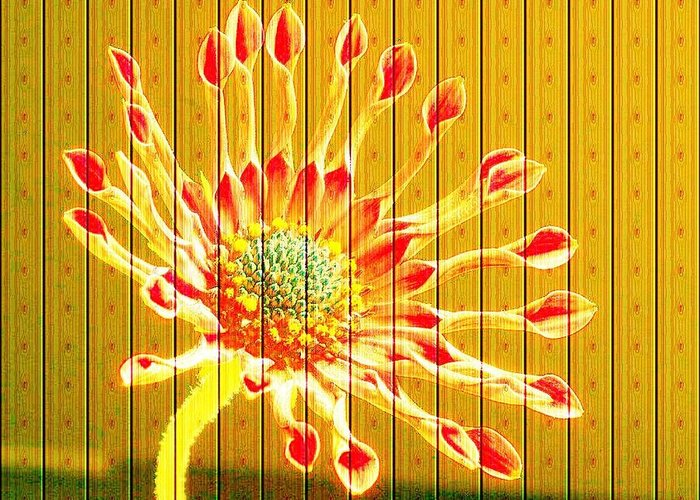 Flower Greeting Card featuring the photograph Wall Flower by Tim Allen