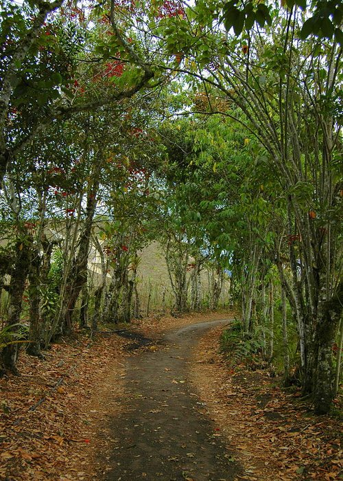 Tropics Greeting Card featuring the photograph Wariman Pathway by Teresa Stallings