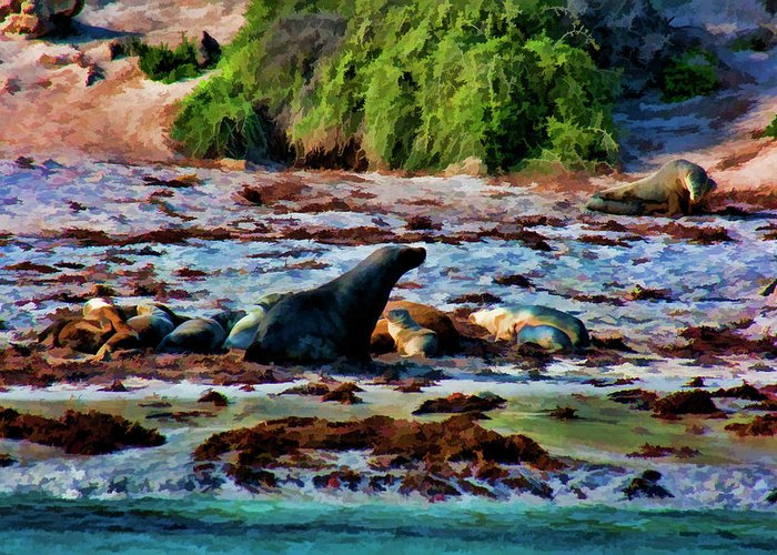 Sea Lions Greeting Card featuring the photograph Warm And Fuzzy by Douglas Barnard