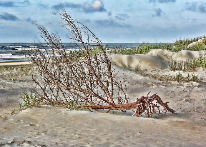 Driftwood Greeting Card featuring the photograph Washed Ashore - Sketch by Michelle Tinger