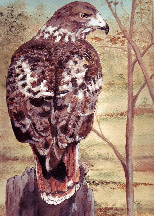 Red-tail Greeting Card featuring the painting Watch Hawk by Debra Sandstrom