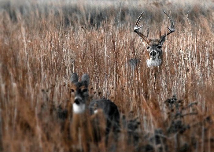 Whitetail Deer Prints Greeting Card featuring the photograph Watcher by Garett Gabriel