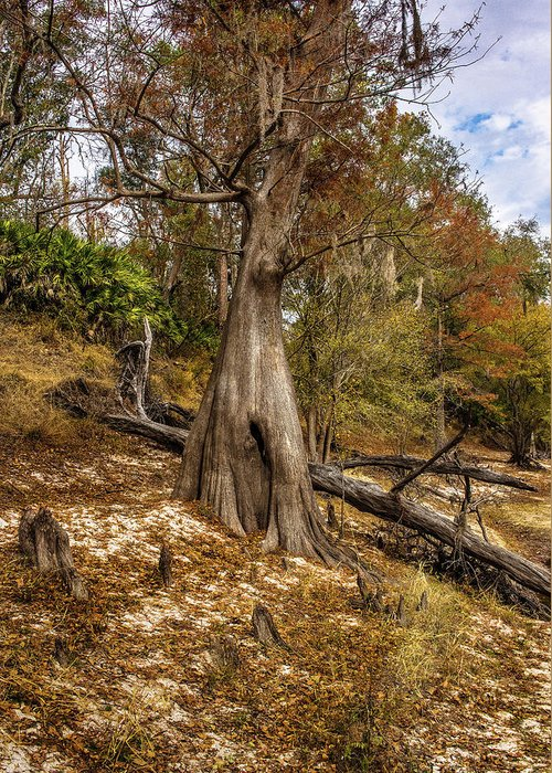 Tree Greeting Card featuring the photograph Water Cypress by Larry Jones