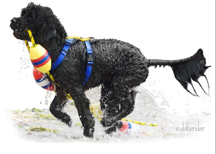 Portuguese Water Dog Greeting Card featuring the digital art Water Dog 7 by Debra Bender