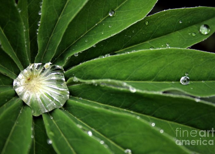 Water Greeting Card featuring the photograph Water Drop by Marta Grabska-Press