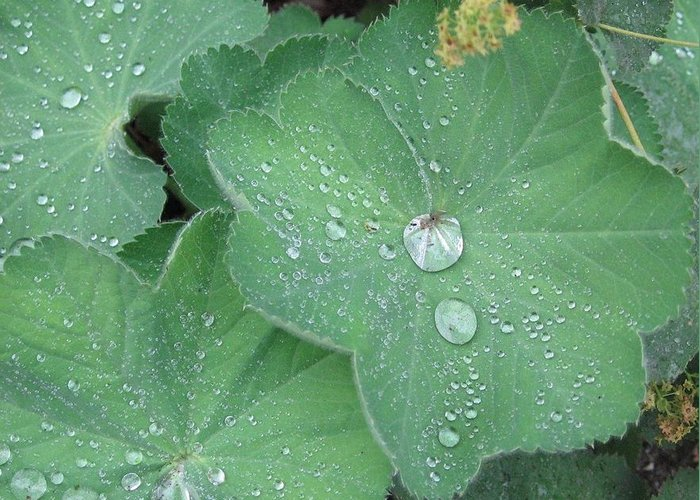 Landscape Greeting Card featuring the photograph Water Droplets by Renae Sears