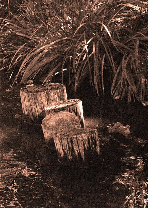 Sepia Greeting Card featuring the photograph Water Garden by Audrey Venute