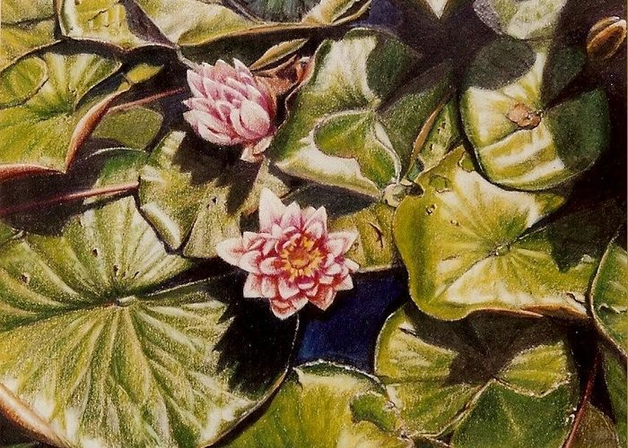 Pink Greeting Card featuring the painting Water Lilies On The Ringdijk by Constance Drescher